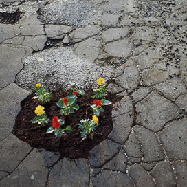 Michael Cataldi: Tire Swings and Flower Pot Holes